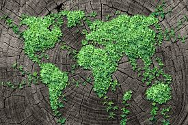 stock photo of dead plant  - Global spread concept and development as a business concept with a map of the world made of an organized group of persistent vine leaves growing on a dead tree trunk as an environmental conservation symbol and icon for renewal - JPG