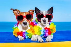 image of married  - cozy couple of dogs in love just married on honeymoon summer holiday vacation at the tropical beach wearing heart shaped sunglasses and flower chain - JPG