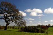 Beverley Westwood Landscape