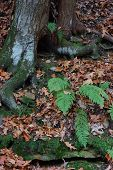 Tree Root And Fern