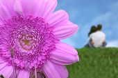 picture of flower girl  - beautiful purple flower with a couple hugging in the background - JPG