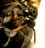 Wasp...(1)