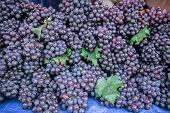 Red Wine Grapes Background Dark Grapes Blue Grapes Wine Grapes poster