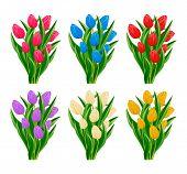 Spring Blooming Tulip Flower Set Isolated On White Background  Illustration. Floral Spring Design El poster