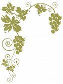 Cachos de uvas e folhas
