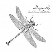 detailed dragonfly vector