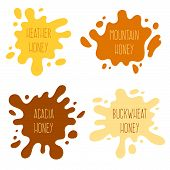 Honey Splash Set Of Labels. Splashes And Drops Collection. Vector Illustration poster