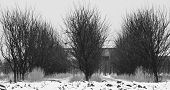 Orchard In Winter Scenery. Three Rows Of Plum Trees. poster