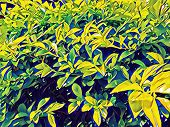 Green Tropical Foliage In Sunny Garden. Bright Foliage Digital Illustration. Natural Leaf Ornament.  poster