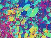 Tropical Foliage Plant In Sunny Garden. Summer Foliage Multicolored Digital Illustration. Natural Le poster