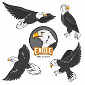 Collection Of Cartoon Eagles. Flying Birds Isolate On White. Eagle Animal Flying, American Predatory poster