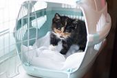 The Cat Sits In A Carrier For Animals . A Pet. Transportation Of Animals. Little Kitten. poster