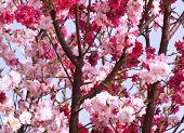 Mixed Blossom Tree