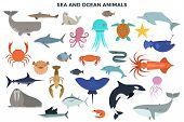 Collection Of Sea And Ocean Animals - Marine Mammals, Reptiles, Fish, Molluscs, Crustaceans. Set Of  poster
