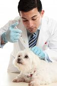 Vet Injection To Dog's Scruff Of Neck