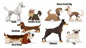 Cute Cartoon Dogs Set. Poodle, Pug, Chinese Crested, Dachshund, Doberman, Basset Hound, Yorkshire Te poster