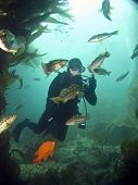 Underwater Photographer Surrounded By Fish In Catalina