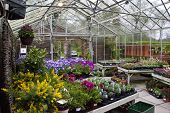 Flowers and plants in retail greenhouse