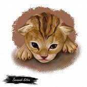 Savannah Cat Hybrid Cat Breed, Cross Between Serval And Domestic Cat. Digital Art Illustration Of Pu poster