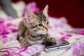 The Striped Kitten Lies On A Pink Blanket. The Kitten Put A Paw On The Smartphone Phone. Sad Kitten poster
