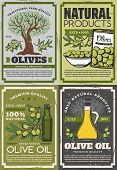 Natural Products Of Olives, Retro Extra Virgin Oil And Fruits On Branches. Vector Organic Dressing I poster