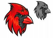 image of cardinals  - Red cardinal bird in cartoon style for mascot symbol design - JPG