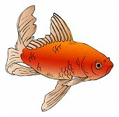 picture of stippling  - Vector ink drawing of a swimming goldfish - JPG