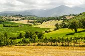 Vineyards Between Rieti And Terni