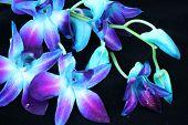 Neon orchids on black velvet