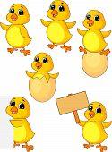 Постер, плакат: Милый маленький цыпленок мультфильм набор