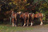 Horse Backs