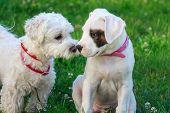 Dog friendship