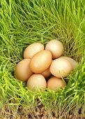 foto of hatcher  - Pile of chicken eggs between green fresh wheat - JPG