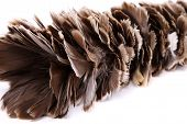Brown feather duster