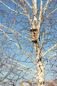 Nesting Box On Birch Against The Blue Sky