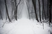 The Mysterious Winter Snowy Forest In A Fog