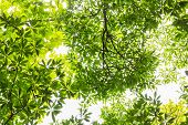 Green Leaf In Forest Tropics