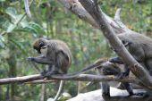 Funny Monkeys At The Zoo