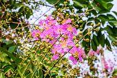 Inthanin Flowers