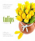 Bunch yellow tulips in pot. Isolated on white background