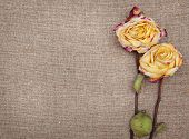 Dry Roses On The Burlap