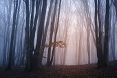 Sun rising in a mysterious forest with fog