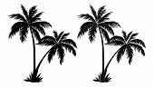 image of outline  - Tropical palm trees - JPG