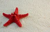 Starfish On Beach Sand