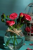 Beautiful small pink roses, on blue background
