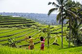 SEPTEMBER 17, 2014 - BALI, INDONESIA: Unidentified Balinese girls dressed in traditional costumes walk across the terraced paddy fields to the village temple for a religious ceremony.