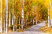 Scenic drive through Aspen trees