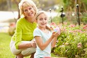 picture of human egg  - Grandmother With Granddaughter On Easter Egg Hunt In Garden - JPG