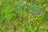 wild flowers on green meadow