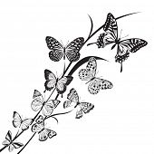 monochrome butterflies design on floral background